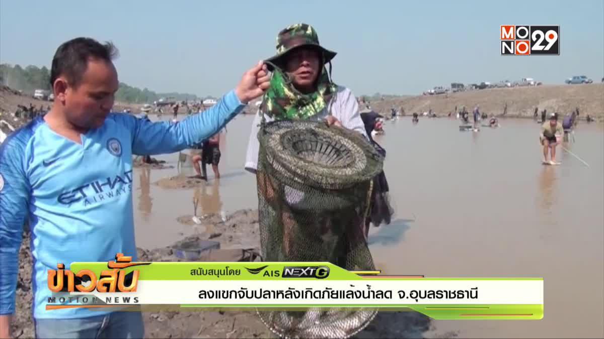 ลงแขกจับปลาหลังเกิดภัยแล้งน้ำลด จ.อุบลราชธานี