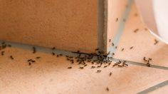 3 ของใช้ในห้องครัวช่วย ไล่มดแมลง ในบ้านแบบง่ายๆ