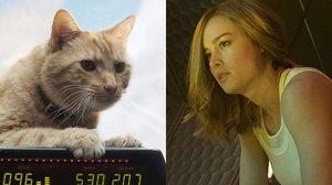 แมวกูสที่ปรากฏตัวในหนัง Captain Marvel กว่า 80% เป็นแมวคอมพิวเตอร์กราฟิก
