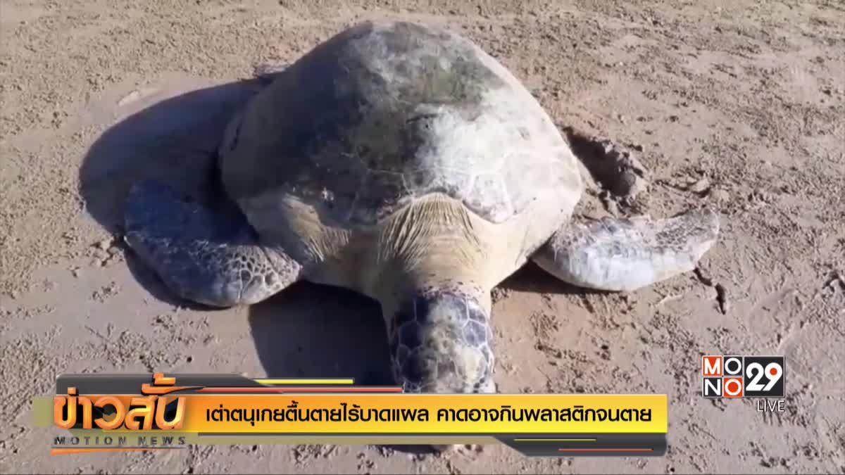 เต่าตนุเกยตื้นตายไร้บาดแผล คาดอาจกินพลาสติกจนตาย