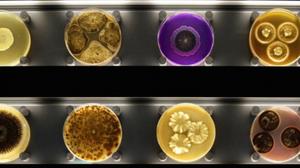 ไมโครเปีย พิพิธภัณฑ์จุลินทรีย์ แห่งแรกในโลก