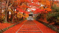 เช็คให้ชัวร์ก่อนเที่ยว! พยากรณ์ฤดูใบไม้เปลี่ยนสี ที่ญี่ปุ่น 2018