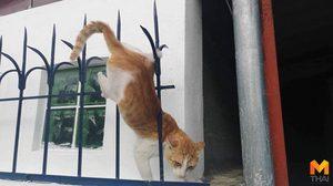 เสียวแทน! นาทีกู้ภัยช่วยแมวน้อย ถูกเหล็กแหลมเสียบ