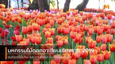 มหกรรมไม้ดอกอาเซียนเชียงราย 2019 ชมดอกไม้บานในสายลมหนาว