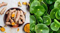 7 อาหารลดการอักเสบ สมานแผล ฆ่าเชื้อแบคทีเรีย โดยไม่ต้องพึ่งยา!!