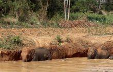 ช่วยช้างป่าพลัดตกสระน้ำ จ.นครราชสีมา