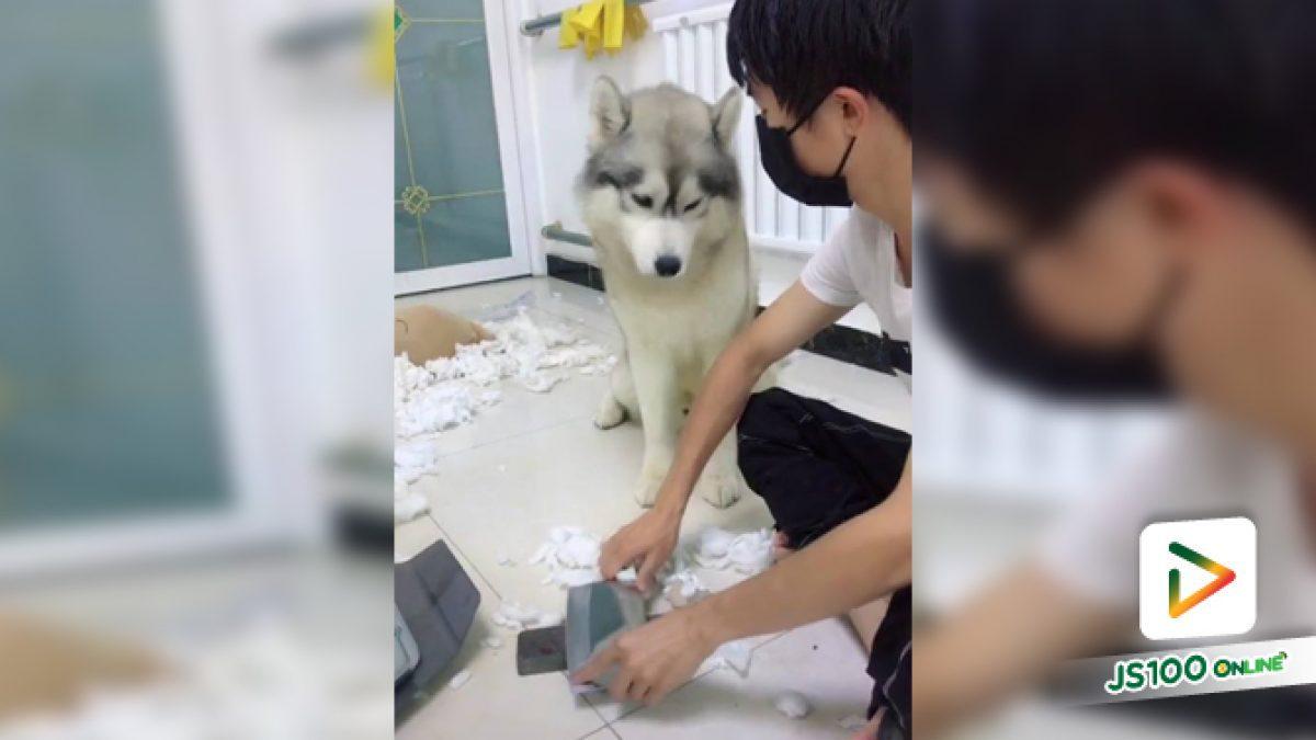 คลิปน้องหมาเล่นกระดาษกระจัดกระจายแล้วสำนึกผิด (21-05-61)