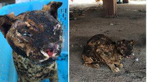 ปาฏิหาริย์ แมว 9 ชีวิตถูกเผาทั้งเป็นกลางไร่อ้อย ทาสแมวแห่ให้กำลังใจ