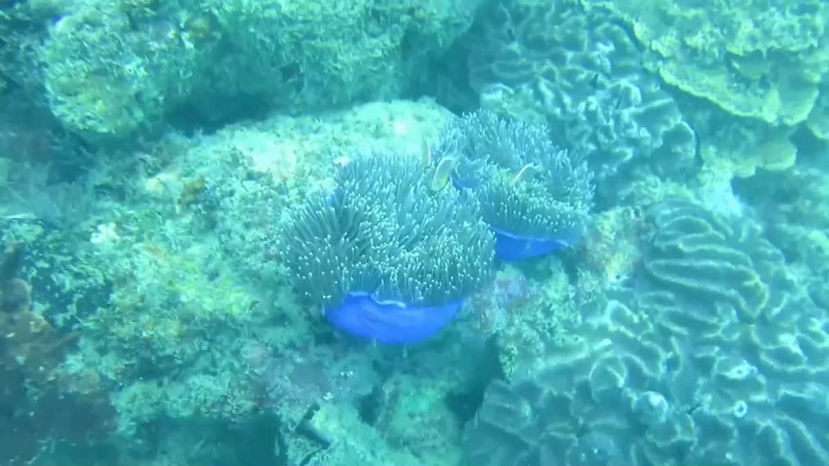 ร้อนจัด!! พบปะการังฟอกขาวหน้า 'เกาะกระดาน'