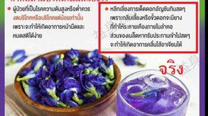 เผยความจริง ข้อความเตือนระวัง กินดอกอัญชันได้หรือไม่ได้ ??