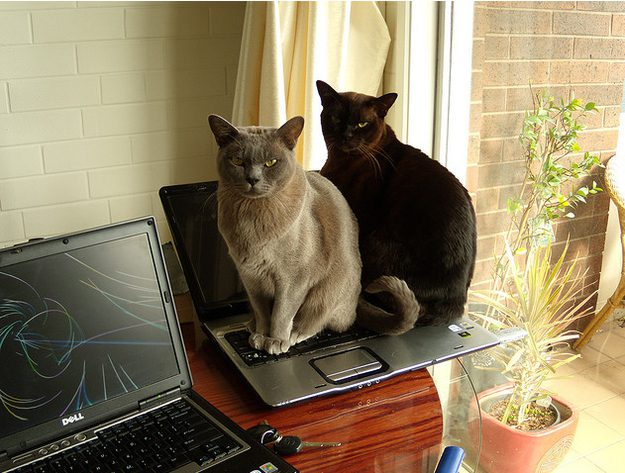 Cats Sitting On Laptop