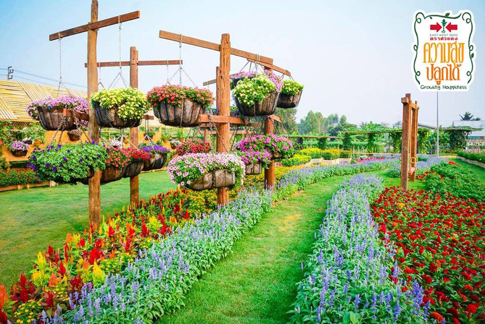 เที่ยวงาน ความสุขปลูกได้ ฟิลด์เดย์ 2019 ชมพืชผักและดอกไม้แปลก ที่เมืองนนท์
