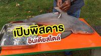 เมนูฉลามบุก! อินเดียโชว์ชำแหละฉลามหนัก 40 ปอนด์ สุดท้ายจะกลายเป็นเมนูอะไร?