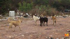 เตือน!! ไปฉีดวัคซีนป้องกัน หากถูกสุนัข-แมว กัด ข่วน ล่าสุดพบผู้ป่วยโรคพิษสุนัขบ้าเพิ่ม