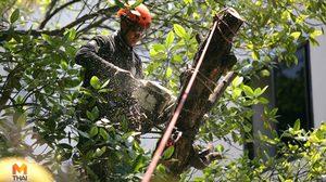 'รุกขกร' อาชีพนักตัดแต่งต้นไม้ รายได้สูงสุดถึงหลักแสน ต้องทำยังไงถึงจะได้ทำอาชีพนี้