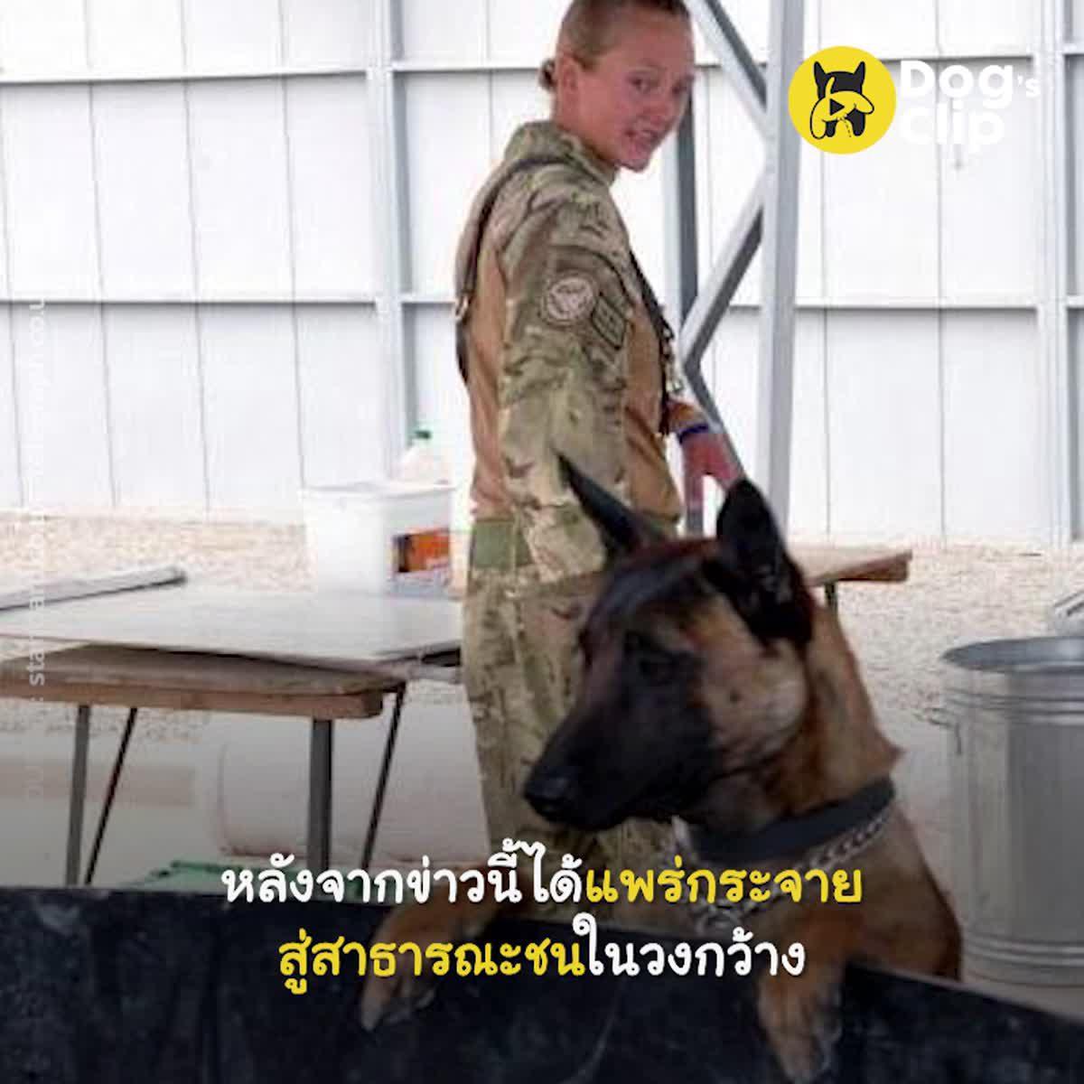 [อัปเดต] น้องหมาทหารที่ปลดประจำการกำลังจะถูกการุณยฆาตเพราะไม่มีใครรับพวกเขาเหล่านั้นไปเลี้ยง | Dog's Clip