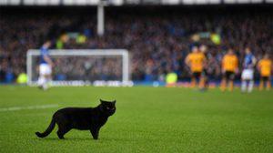 ทำอะไรกันเจ้ามนุษย์! 'แมวดำ' ป่วนสนามคู่ 'ท๊อฟฟี่-หมาป่า' เรียกเสียงปรบมือจากแฟนบอล