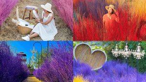 6 คาเฟ่ทุ่งหญ้าหลากสี ที่เที่ยวใกล้กรุงเทพฯ ช่วงนี้กำลังฮิตต้องไปเช็คอิน!