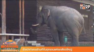 ผงะ! ช้างป่าเข้าทำลายร้านค้า อุทยานแห่งชาติเขาใหญ่