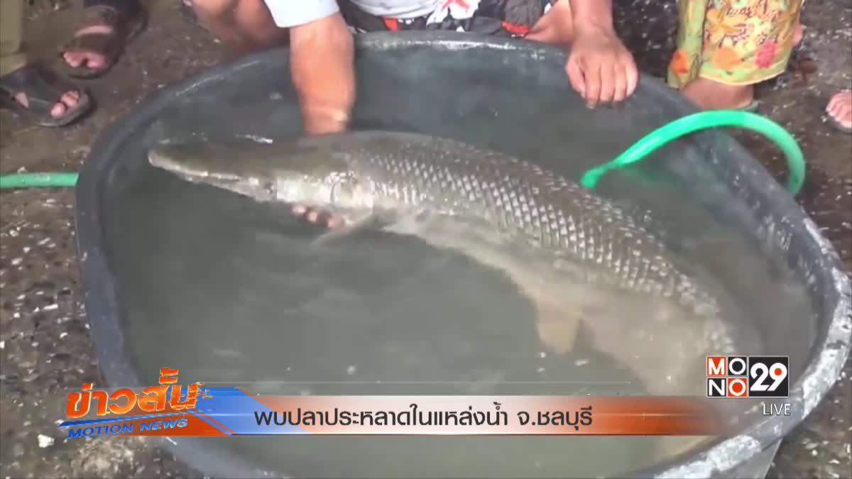 พบปลาประหลาดในแหล่งน้ำ จ.ชลบุรี