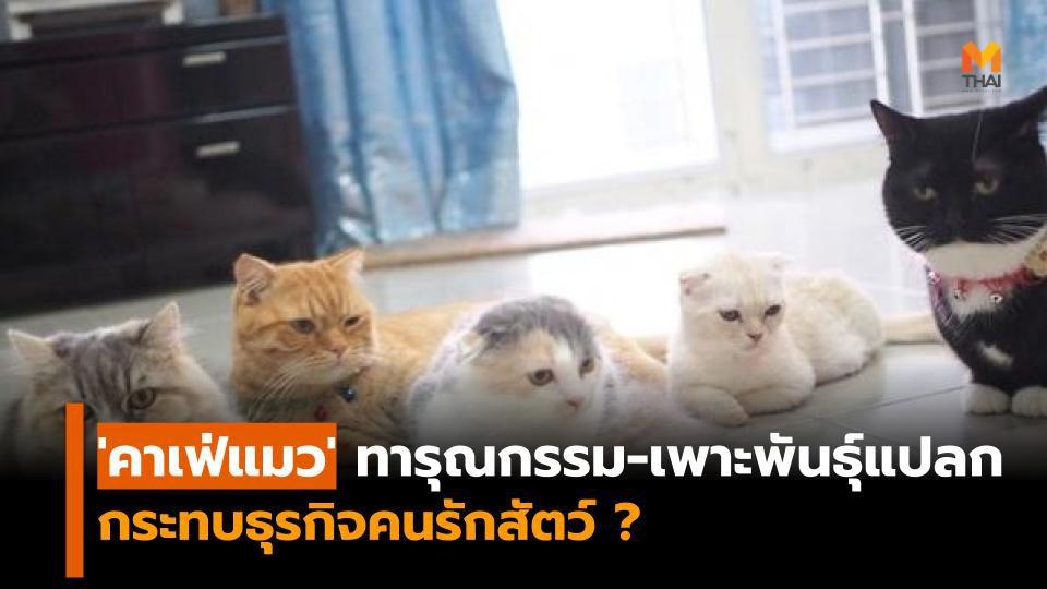 หดหู่ 'คาเฟ่แมว' ย่านวัชรพล ทารุณกรรมสัตว์ ทำกระทบธุรกิจคนรักแมว?