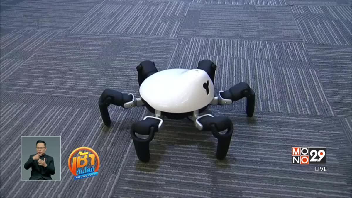 """บริษัทในจีนคิดค้นหุ่นยนต์แมงมุม """"HEXA"""""""