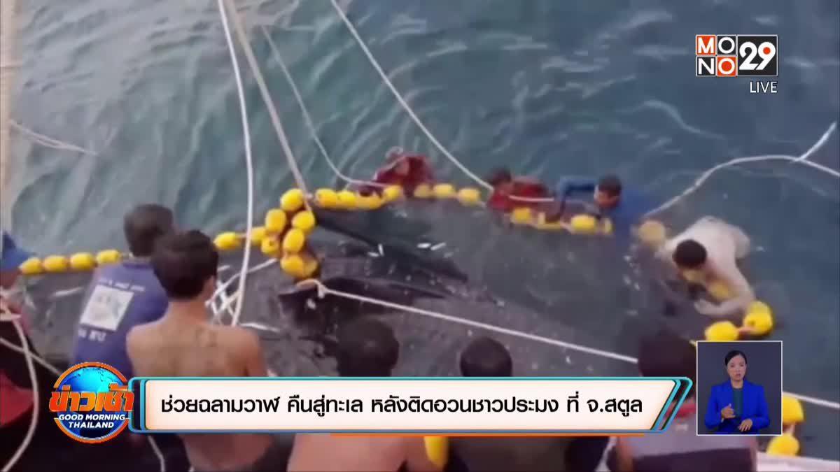ช่วยฉลามวาฬ คืนสู่ทะเล หลังติดอวนชาวประมง ที่ จ.สตูล