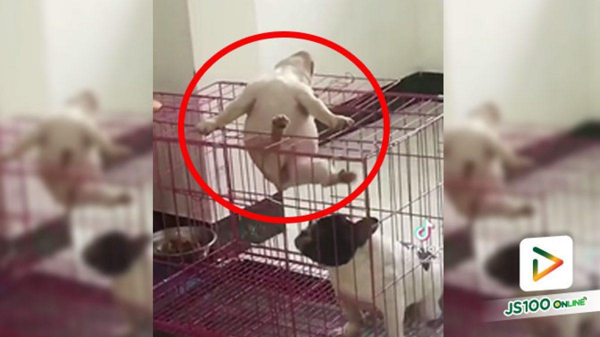 คุณตำรวจช่วยด้วยค่ะ มีนักโทษแหกคุก!!