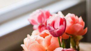 Gallery รูปภาพดอกไม้สวยๆ หลากหลายชนิด ภาพแจกฟรี