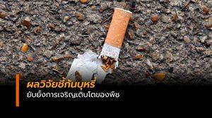 วิจัยชี้ก้นบุหรี่ยับยั้งการเจริญเติบโตของพืช