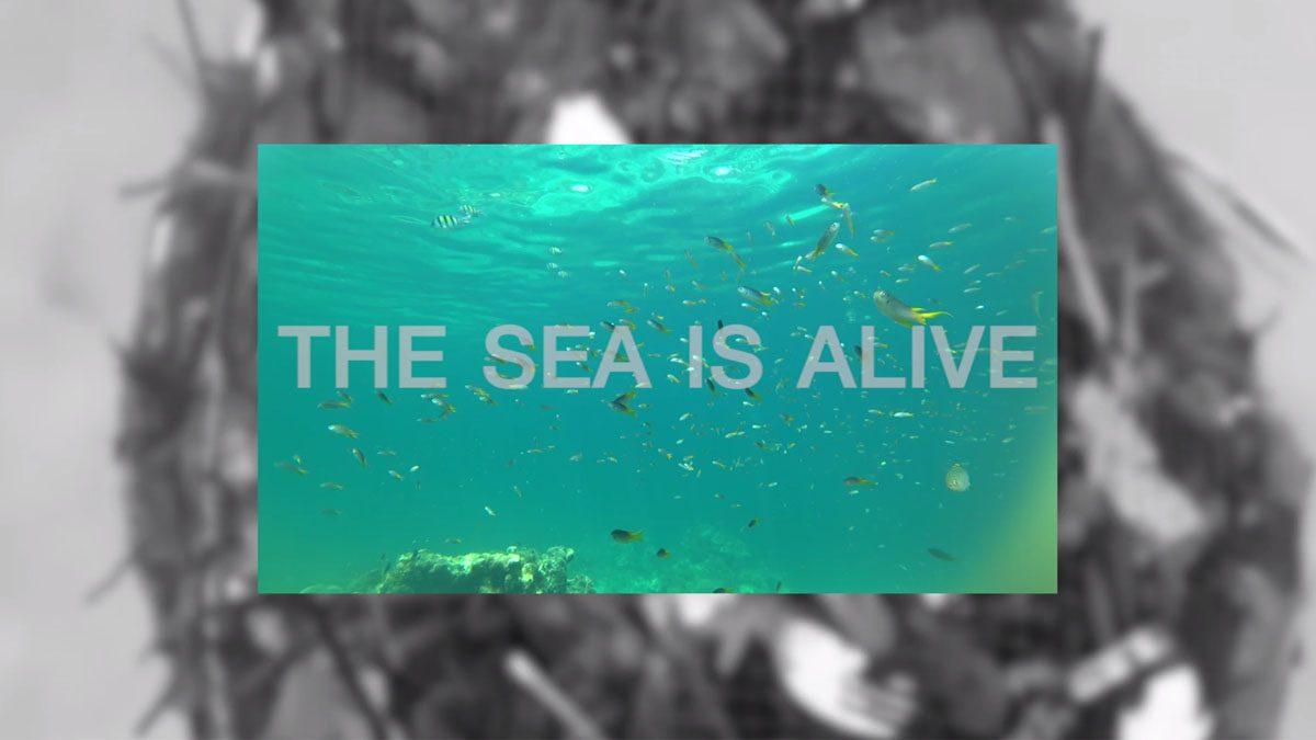 HELP THE SEA
