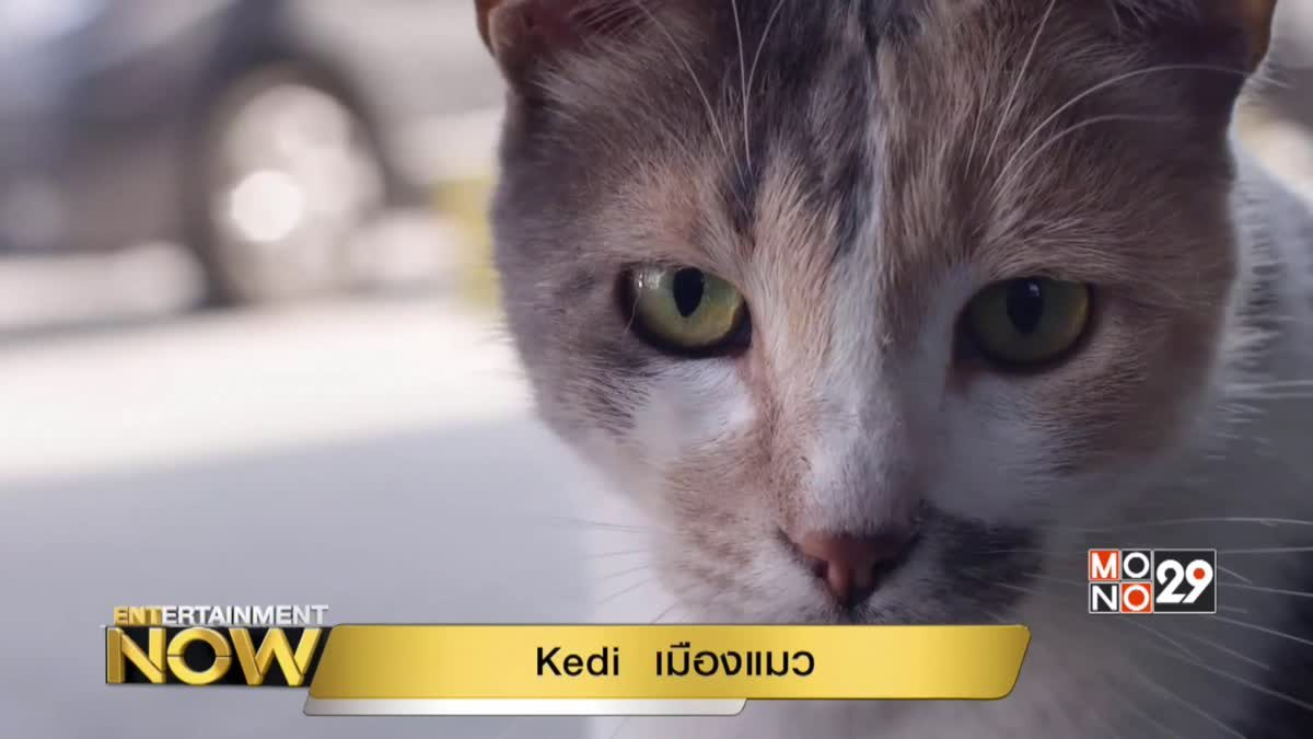 Movie Review : Kedi เมืองแมว
