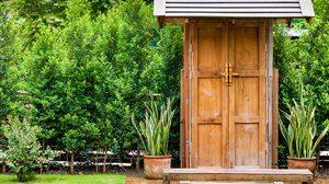 5 ต้นไม้ปลูกริมรั้ว ในบ้าน บังแดดบังลม เพิ่มความสดชื่น อย่างเป็นธรรมชาติ