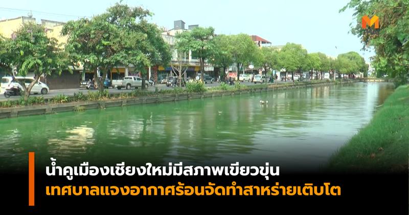 คนเชียงใหม่กังวลหลังน้ำคูเมืองมีสภาพเขียวขุ่น เทศบาลแจงอากาศร้อนจัด