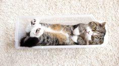 """ชมความน่ารักของ """"มารุแมวกล่อง"""" ผู้คว้ารางวัลสัตว์ที่มียอดวิวสูงสุดในยูทูป"""