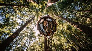 เก๋ให้สุด บ้านต้นไม้ ทรงลูกสนที่ออกแบบให้ชมวิวแบบ 360 องศา