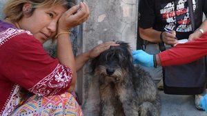 ซึ้งใจแม่ค้าน้ำอัดลม โทรเรียกกู้ภัย ช่วยสุนัขถูกล่ามโซ่ คอเป็นแผลเหวอะ