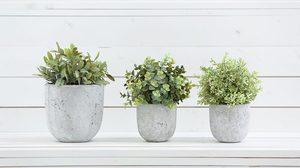 4 วิธีดูแล ไม้กระถาง ให้เติบโตได้ดี