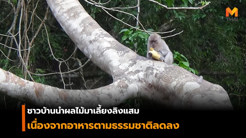 ชาวบ้านนำผลไม้มาเลี้ยงลิงแสมนับร้อยตัว เนื่องจากอาหารตามธรรมชาติลดลง