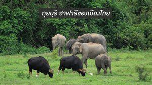 กุยบุรี ซาฟารีของเมืองไทย
