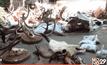 ค้นบ้านผู้รับเหมาก่อสร้าง พบสัตว์ป่าคุ้มครอง-ซากสัตว์เพียบ