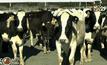 นมล้นตลาดโลกกระทบเกษตรกรนิวซีแลนด์