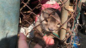 ศูนย์วิจัย มจธ. ชี้ ฐานข้อมูลและกฎหมายควบคุมการค้าขายสัตว์ป่าที่เข้มแข็ง ลดการระบาดของโรคจากสัตว์สู่คน