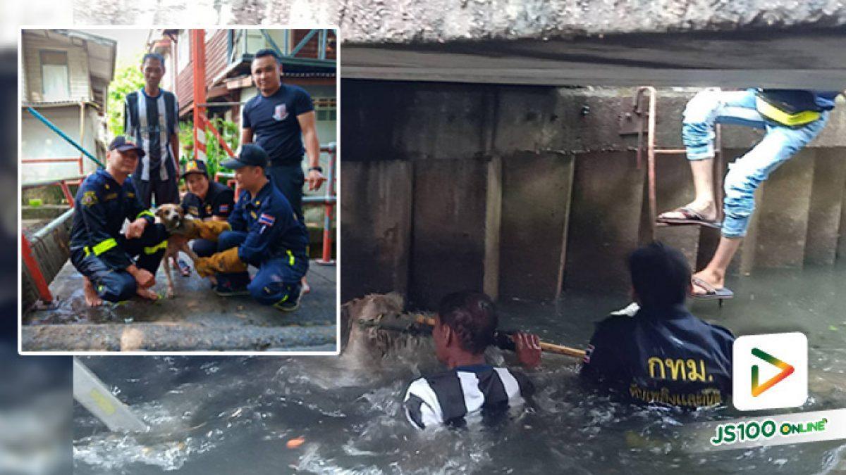 เจ้าหน้ากู้ภัยช่วยเหลือสุนัขพลัดตกคลองส่งน้ำ ในซอยเจริญนคร 53 จนสามารถนำขึ้นมาได้อย่างปลอดภัย (06-06-62)