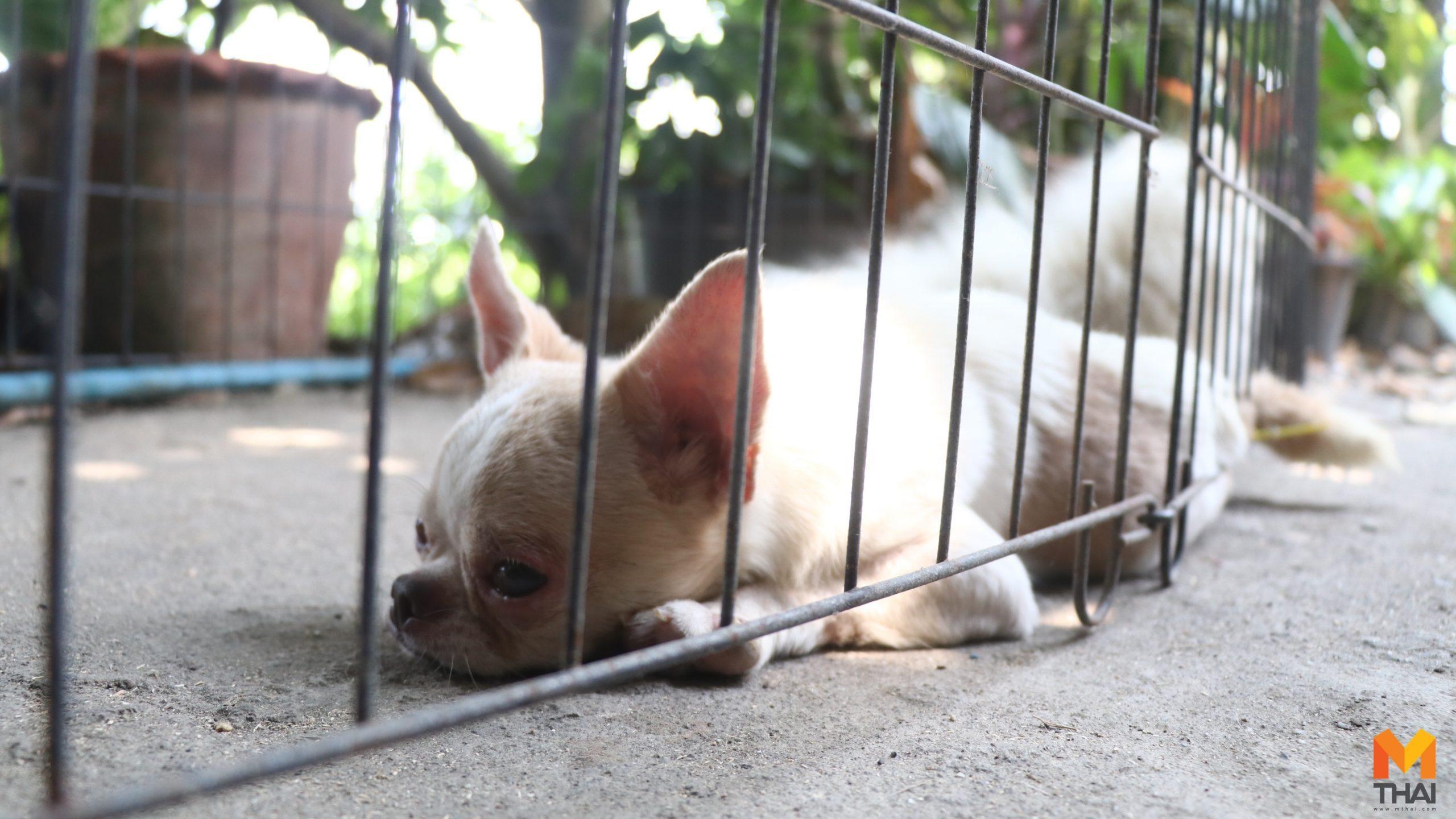 ปศุสัตว์บุกช่วยสุนัขกว่า 40ตัว แฉที่เลี้ยงไม่เหมาะสมแถมเพาะขายด้วย