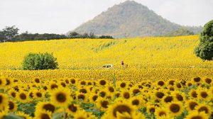 มาอีกแล้วมาตการกระตุ้นเศรษฐกิจ รัฐเล็งแจกเงิน 1,500 เที่ยวไทย