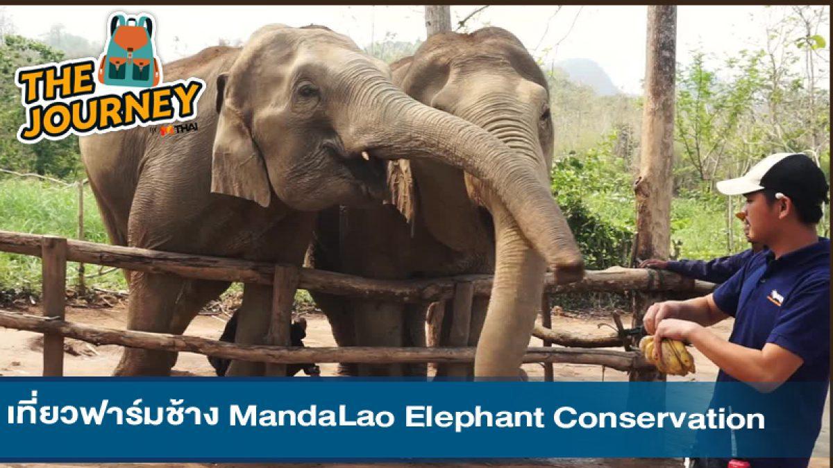 เที่ยวฟาร์มช้าง MandaLao Elephant Conservation @หลวงพระบาง