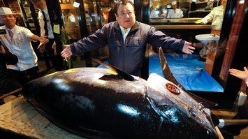 ฉลองตลาดปลาแห่งใหม่ในโตเกียว ปลาทูน่า Bluefin ปิดประมูลไปที่ราคา 99 ล้านบาท!!