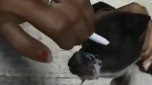 สาวโหดจับลูกสุนัขมัดปาก เอาบุหรี่จี้ตา