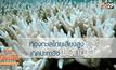 ท้องทะเลไทย เสี่ยงสูง การเกิดปะการังฟอกขาว